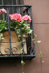 Brownstone Flower Box